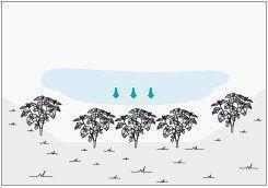 proteger plantas de helada