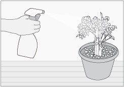 regar planta con rociador