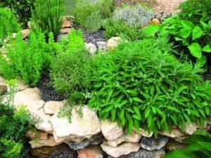 cantero con plantas aromaticas