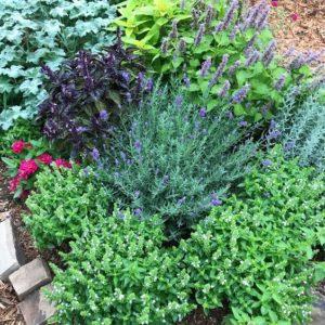 jardin con plantas aromaticas