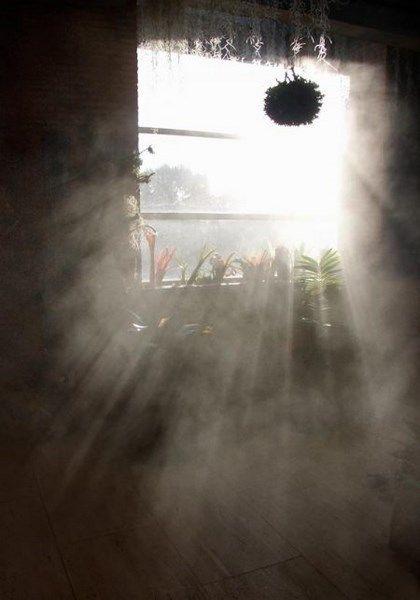 efecto niebla en invernadero