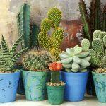 Plantas de poco mantenimiento: cactus y suculentas