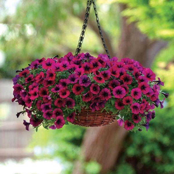 decorar con petunias colgantes en macetas