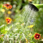 regar plantas cuidados