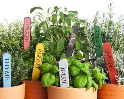 Plantas aromaticas en macetas casa web for Plantas aromaticas en macetas