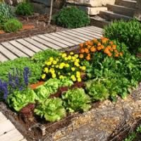 huerta en jardin pequeño