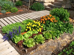 Huerta en jardin peque o casa web for Cultivar vegetales en casa