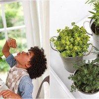 plantas aromaticas 4
