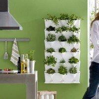 plantas_aromaticas en la cocina