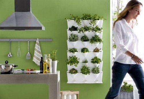 plantas aromaticas 7