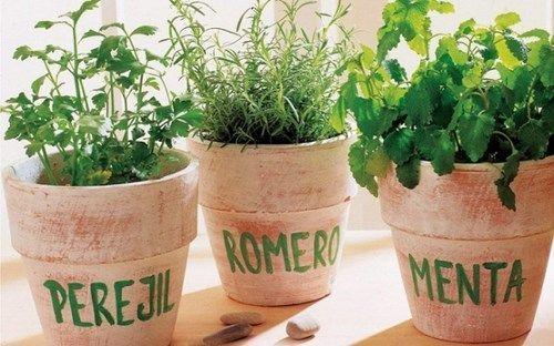 sembrar-aromaticas