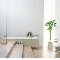 Un árbol de hoja perenne en el baño
