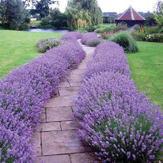 Que son y cuales son las plantas ornamentales casa web for Que significa plantas ornamentales