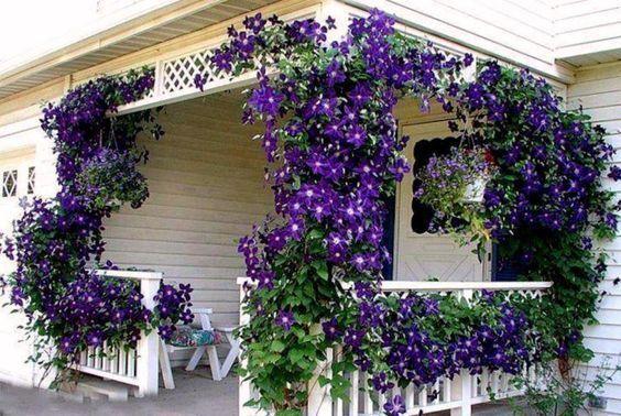 Ornamentales trepadoras casa web for Que son plantas ornamentales