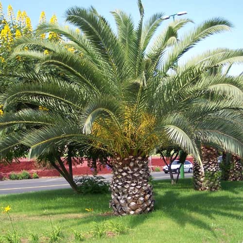 Que son y cuales son las plantas ornamentales casa web for Viveros canarias