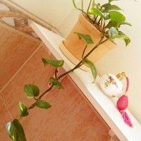 plantas decorativa para el baño