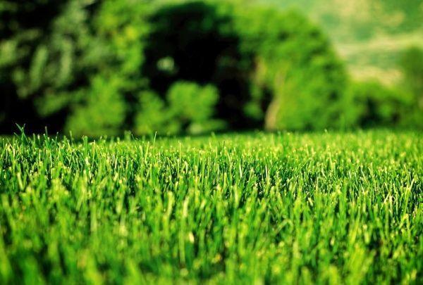 plantar y cuidar cesped