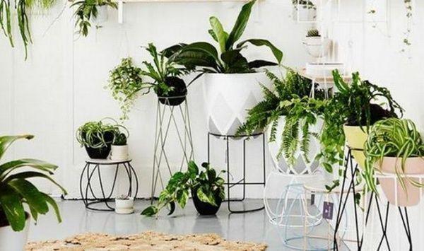 plantas para decorar el interior del hogar