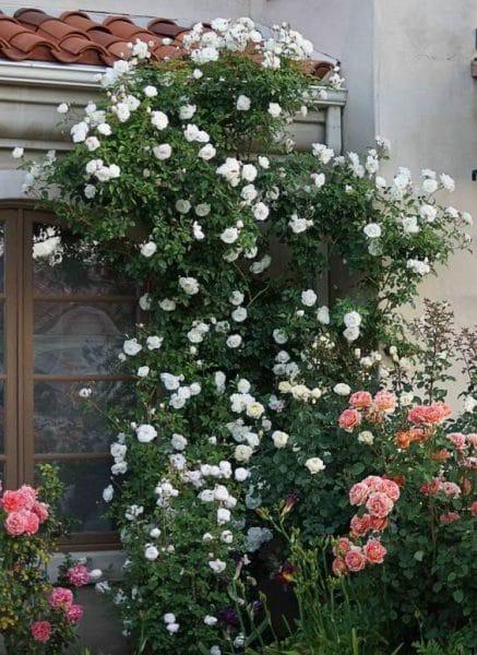 Decoracion de jardines con rosas