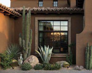Ornamentales plantas para decorar el jardin cactus