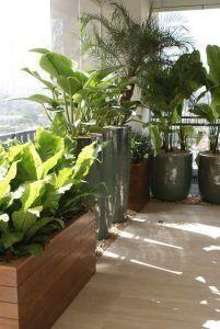 asplenio planta ornamental en balcon