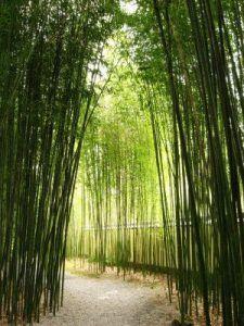 bambues para adornar jardin