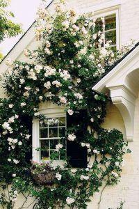 decoracion de jardines con rosas blancas