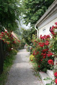 decoracion de jardines con rosas rojas