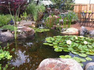 plantas acuaticas ornamentales