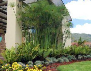 plantas ornamentales para adornar jardines