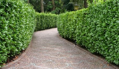 Arbustos Perennes Para Jardin Los Arbustos Perennes Para Jardines - Arbustos-para-vallas