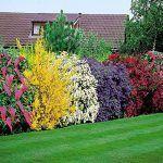 arbustos con flores para cercos