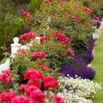 jardin con plantas ornametnales de exterior
