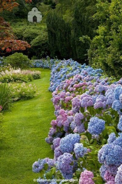 arbusto ornamental parquizacion de jardines exteriores
