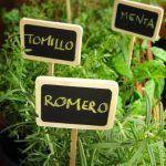 plantas aromaticas para la cocina