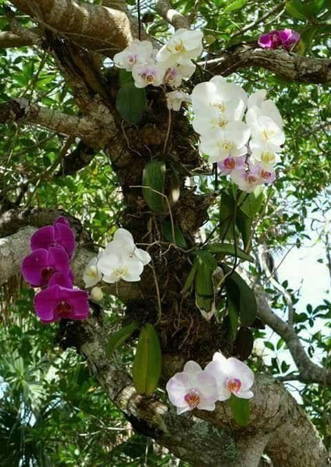 Orquídeas epífitas crecen en el aire