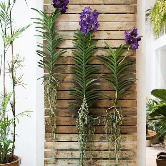 Vanda orquidea en pared decoracion exterior