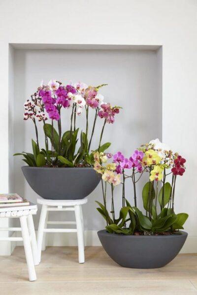 decorar interior con orquideas Phalaenopsis