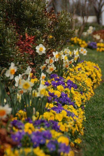 flores contrastantes y alegres