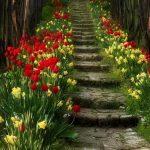flores tonos complementarios rojo y amarillo