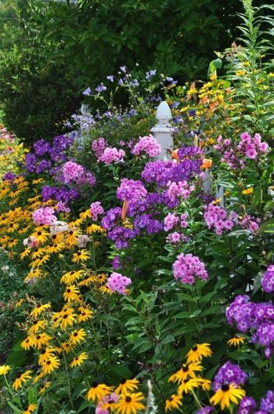jardin con colores complementarios amarillo y violeta