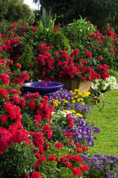 jardin con flores contrastantes y alegres