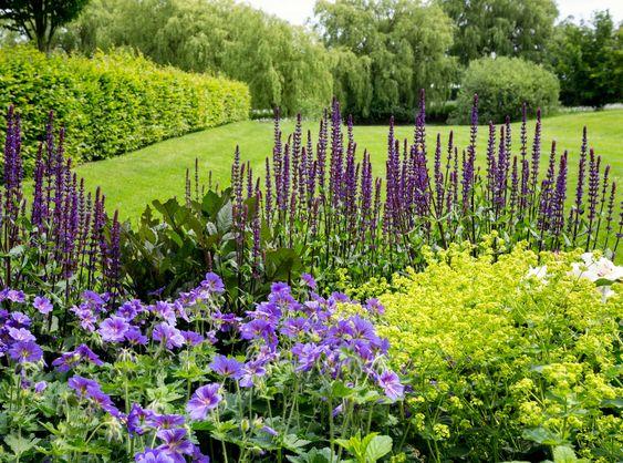 jardin con flores monocromaticas lilas