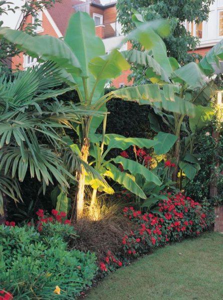 jardin con flores rojas monocromaticas