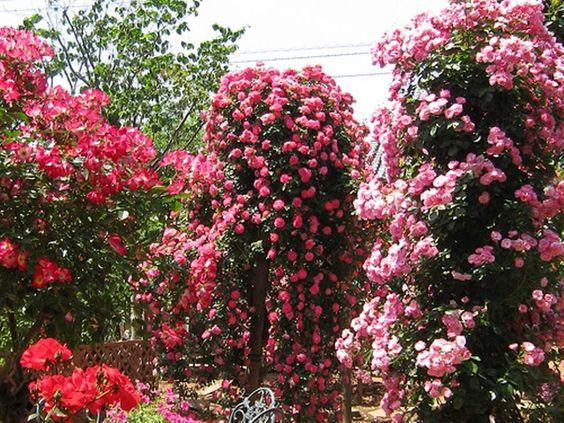 jardin con plantas de diferentes tonos rosados