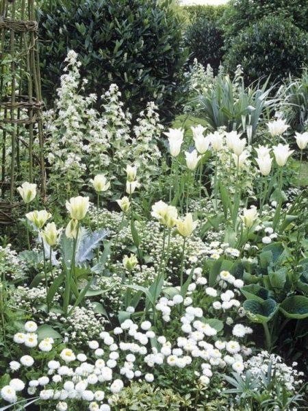 parquizacion monocromaticas con flores blancas