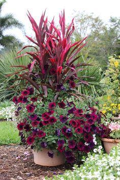 Jardin con petunia morada
