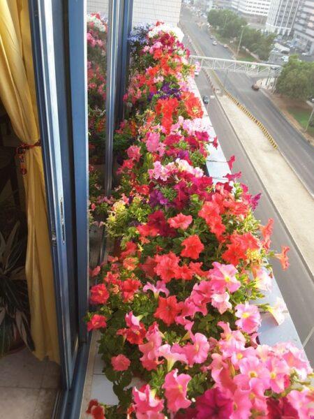 decoracion de balcon con petunias