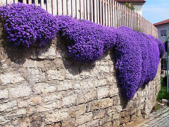 decoracion de muros con flores Arabis