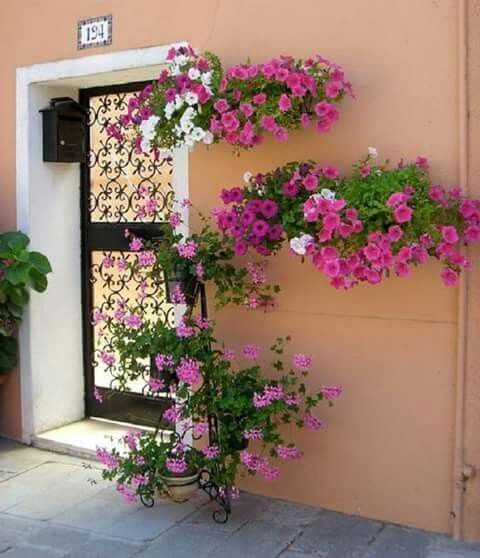 decorar pared con petunias